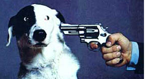 Shoot dog