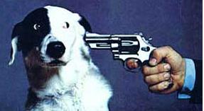Shoot dog