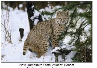 NH Wildcat